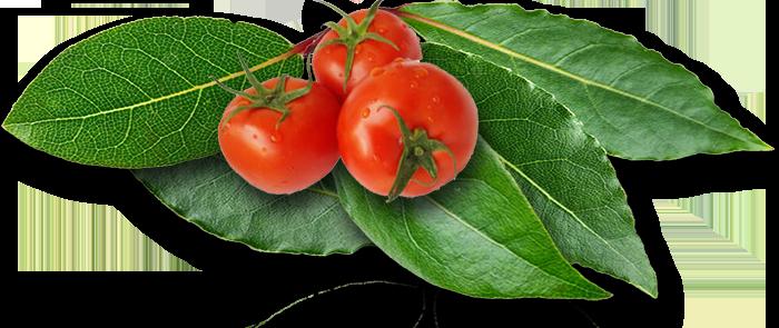 Laakerinlehti ja tomaatti